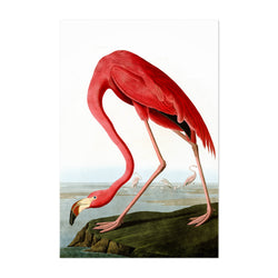 Flamingo Bird Illustration Color Art Print