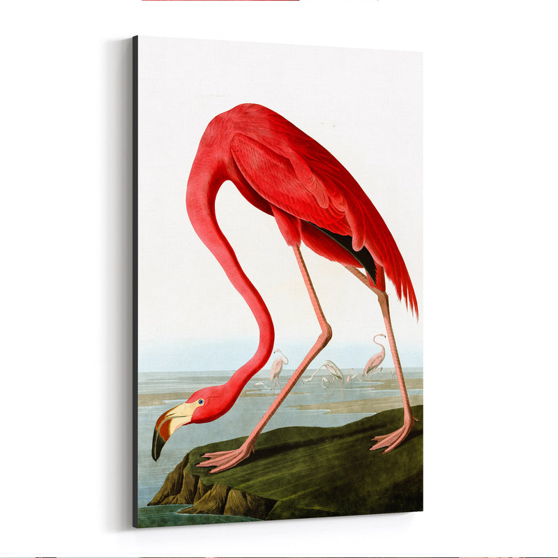 Flamingo Bird Illustration Color Canvas Art Print