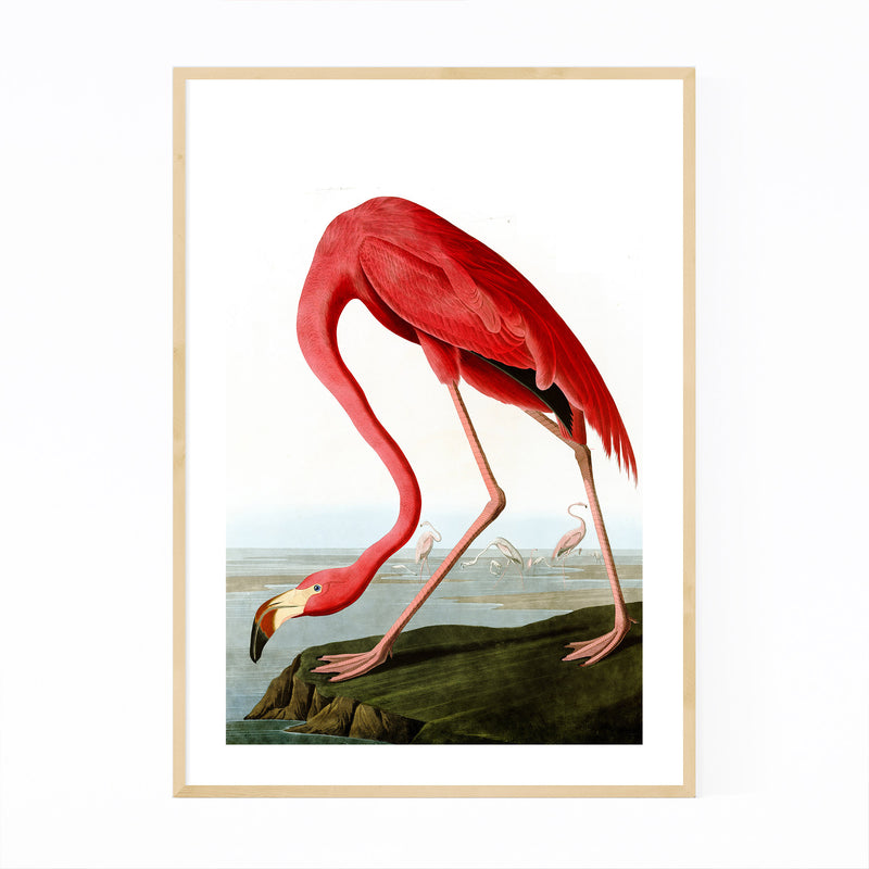 Flamingo Bird Illustration Color Framed Art Print