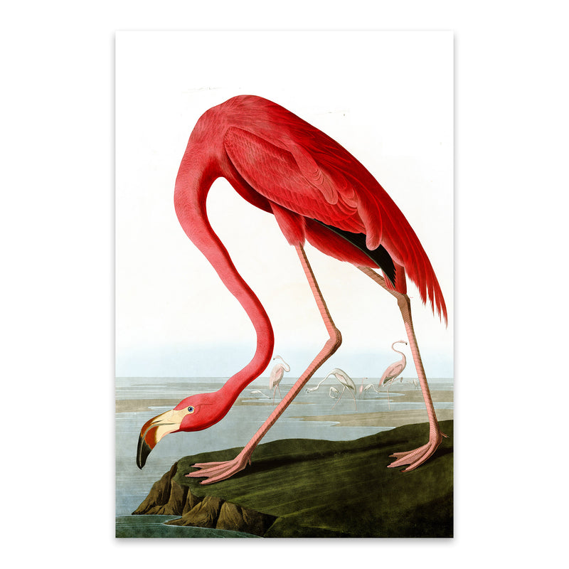 Flamingo Bird Illustration Color Metal Art Print