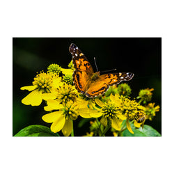 Butterfly on Yellow Flowers Art Print