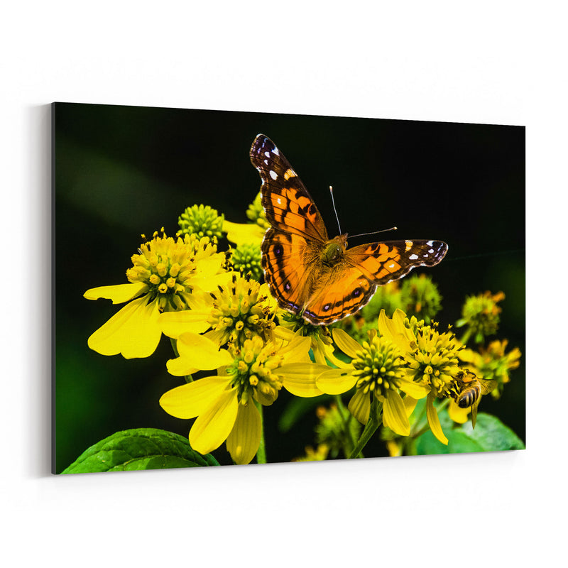 Butterfly on Yellow Flowers Canvas Art Print