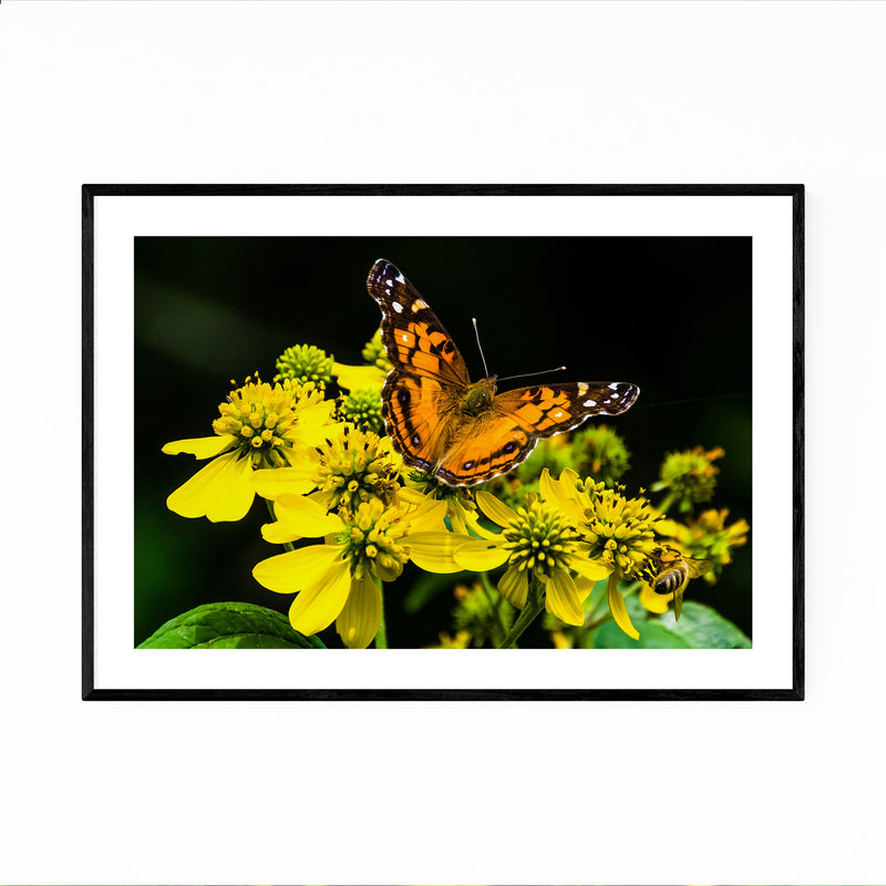 Butterfly on Yellow Flowers Framed Art Print