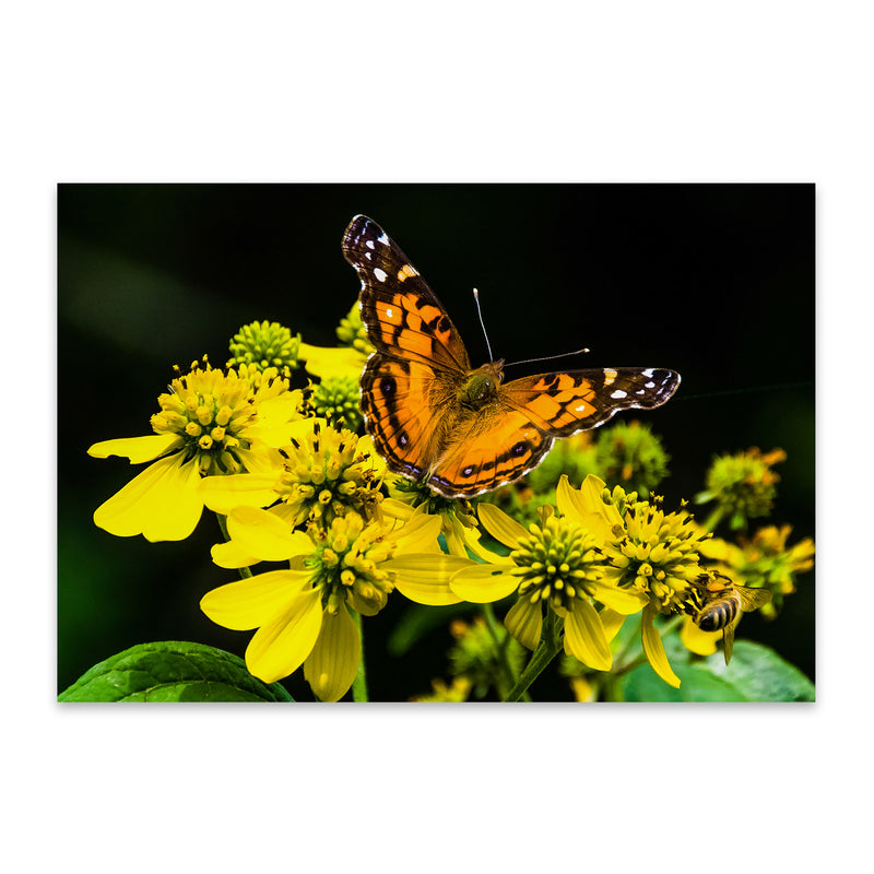Butterfly on Yellow Flowers Metal Art Print