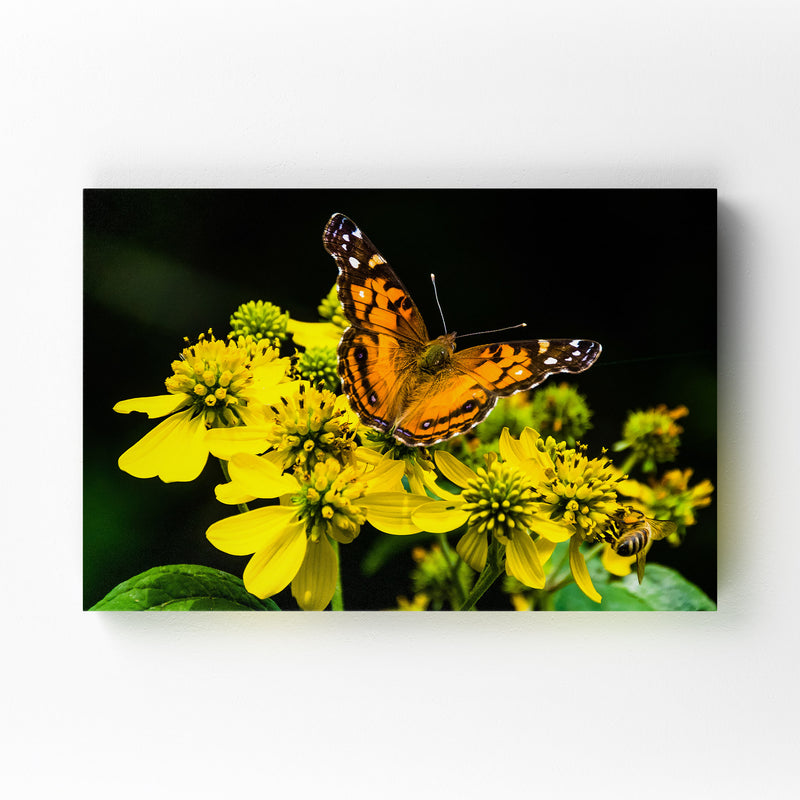 Butterfly on Yellow Flowers Mounted Art Print