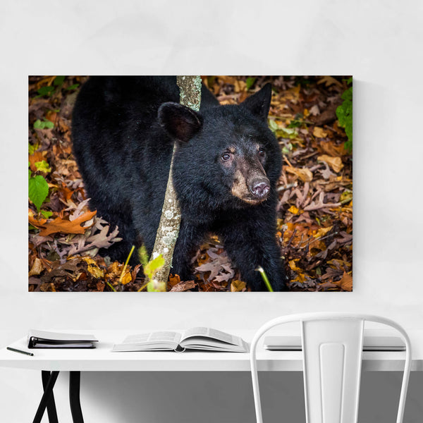 Black Bear Cub Wildlife Art Print