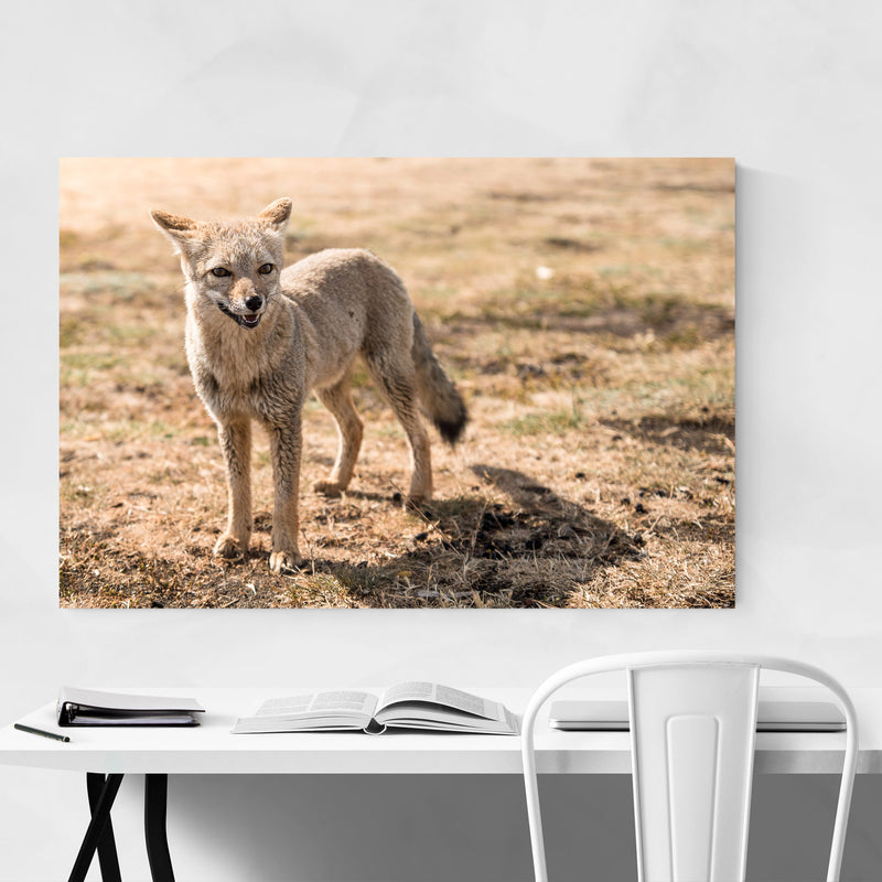 Fox Wildlife Patagonia Argentina Metal Art Print