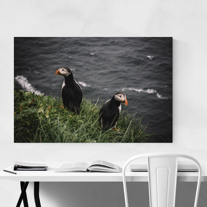 Faroe Islands Puffins Wildlife Canvas Art Print