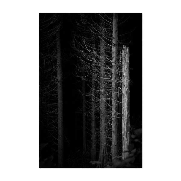 Dark Forest Nature Landscape Art Print