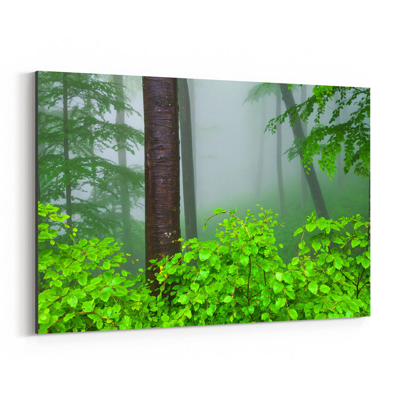 Bulgaria Misty Green Forest Fog Canvas Art Print