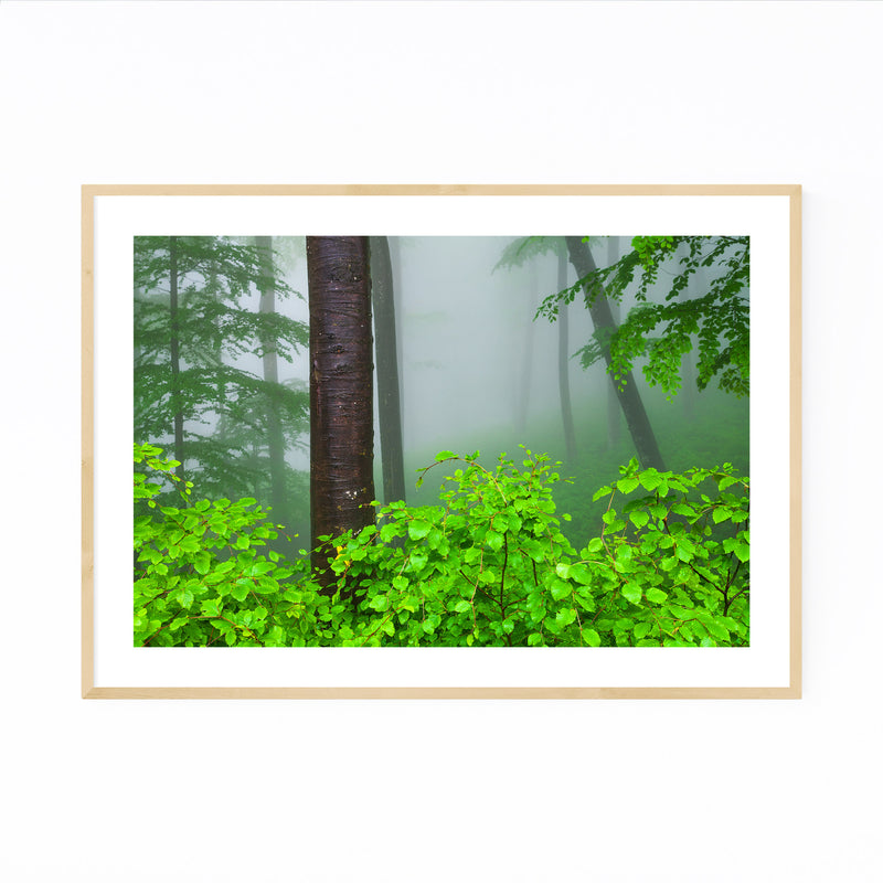 Bulgaria Misty Green Forest Fog Framed Art Print