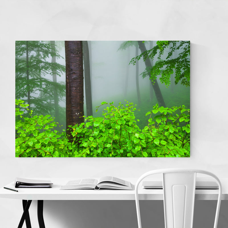 Bulgaria Misty Green Forest Fog Metal Art Print