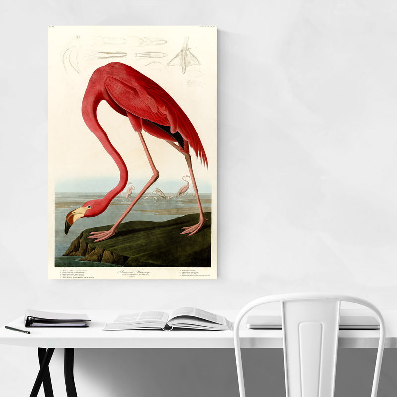 Vintage American Flamingo Poster Canvas Art Print