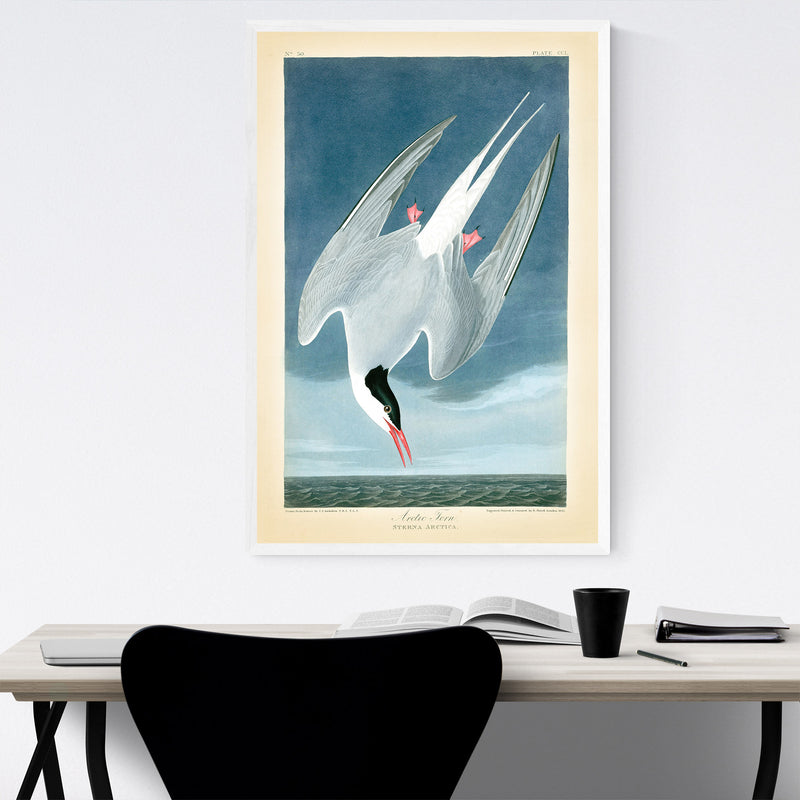 Vintage Arctic Tern Bird Nature Framed Art Print
