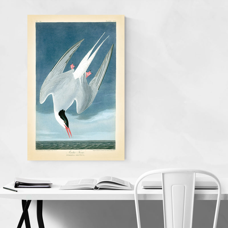 Vintage Arctic Tern Bird Nature Canvas Art Print