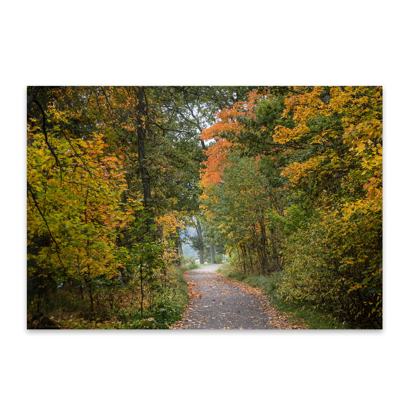 Autumn Fall Forest Trail Nature Metal Art Print