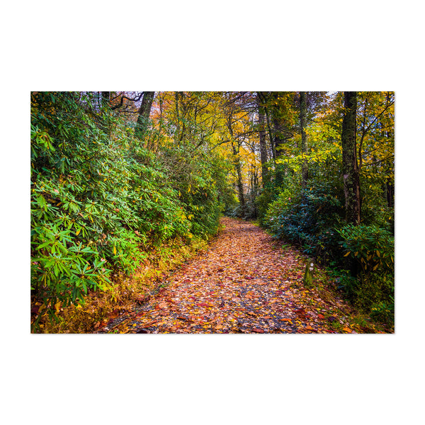 Autumn Fall Leaves on Trail Art Print
