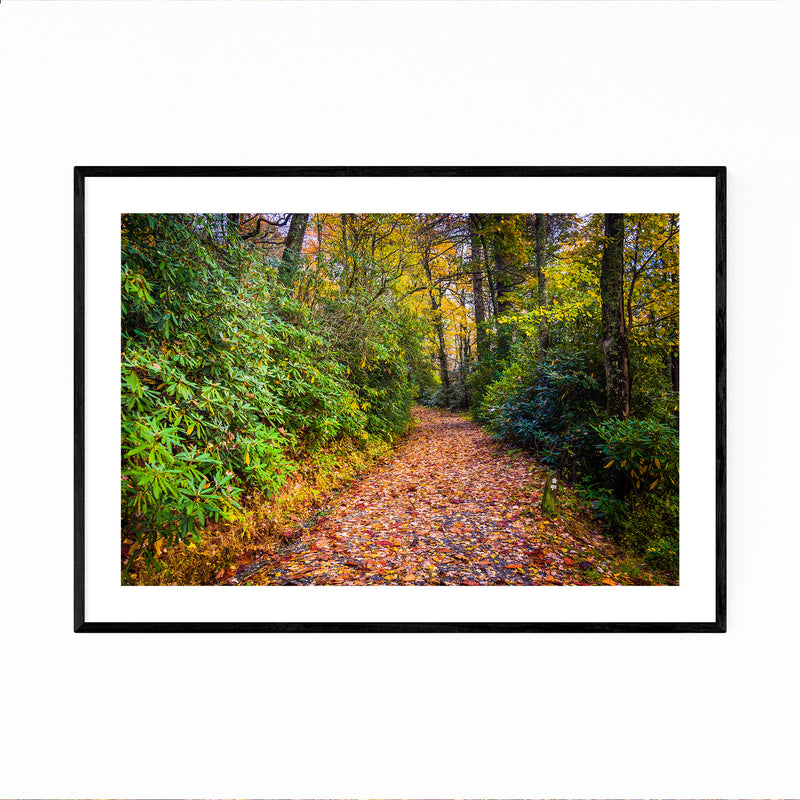 Autumn Fall Leaves on Trail Framed Art Print