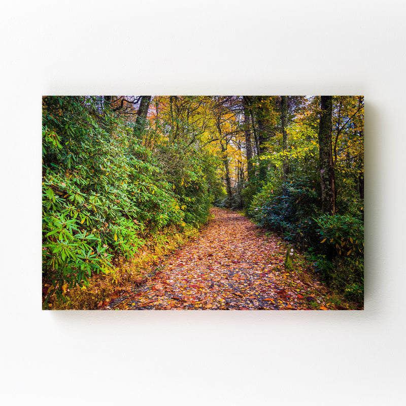 Autumn Fall Leaves on Trail Canvas Art Print