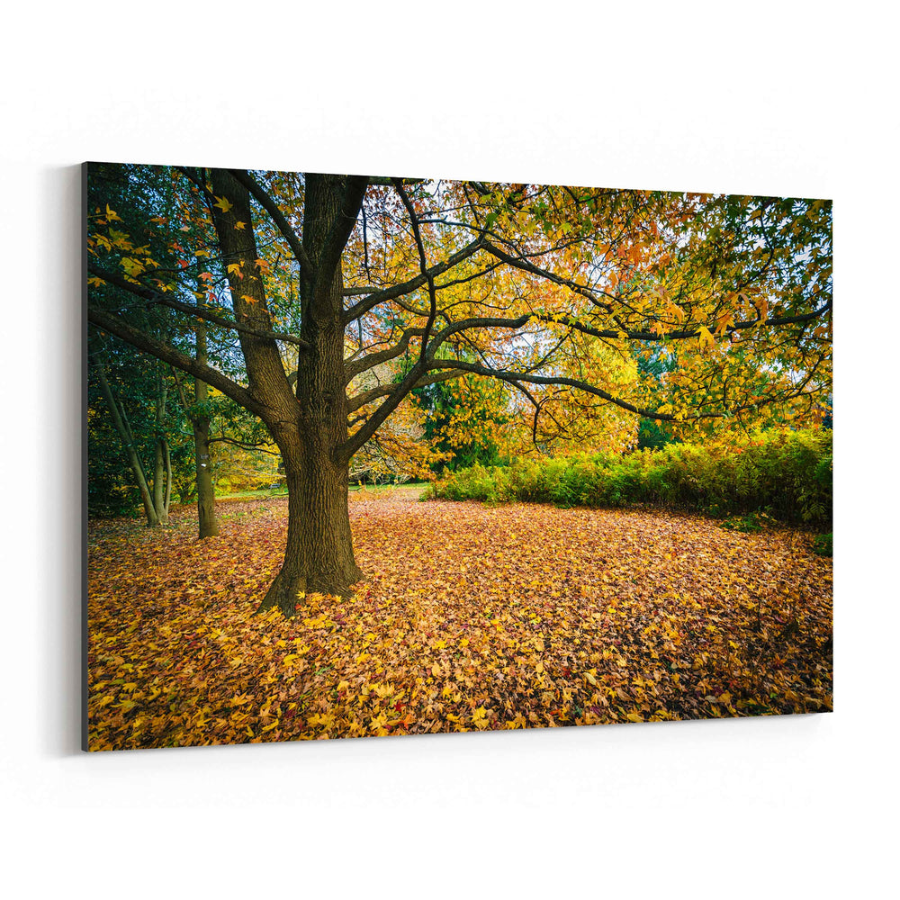 Fall Autumn Leaves Forest Nature Canvas Art Print