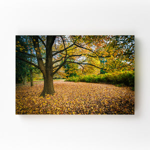 Fall Autumn Leaves Forest Nature Mounted Art Print