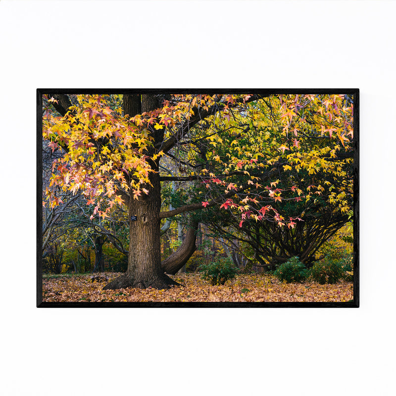 Fall Autumn Leaves Forest Nature Framed Art Print