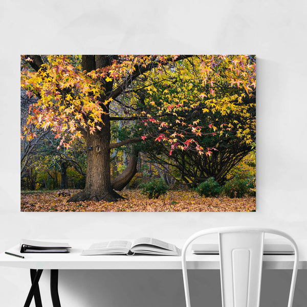 Fall Autumn Leaves Forest Nature Art Print