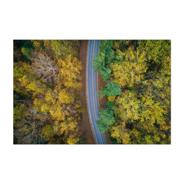 Fall Color Forest Along Road Art Print