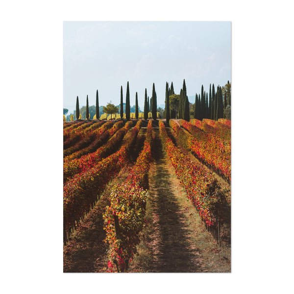 Tuscany Italy Vineyard Nature Art Print