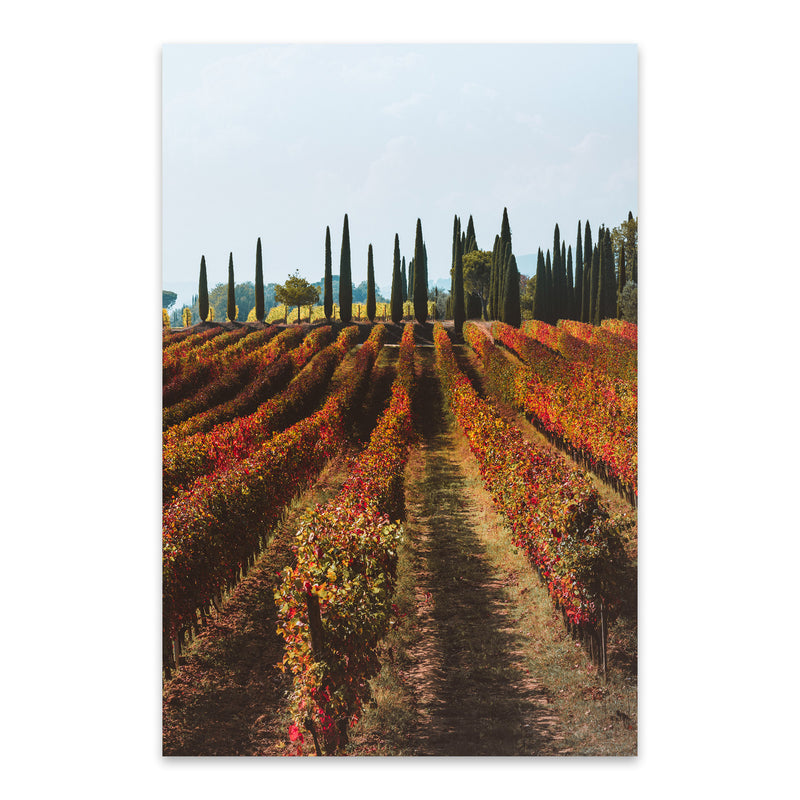 Tuscany Italy Vineyard Nature Metal Art Print