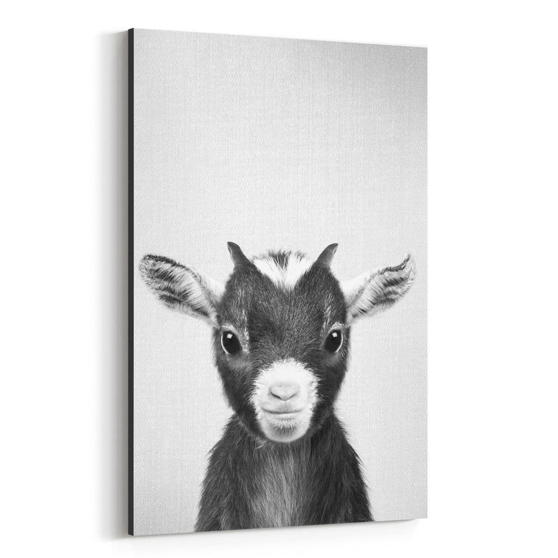 Cute Baby Goat Peekaboo Animal Canvas Art Print