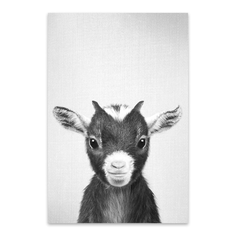 Cute Baby Goat Peekaboo Animal Metal Art Print