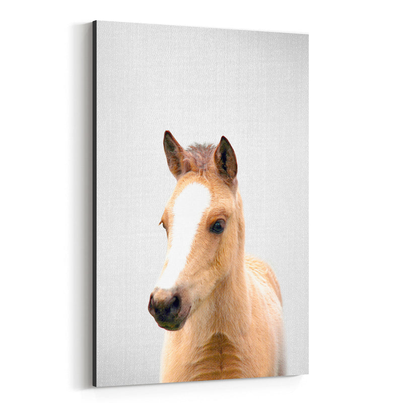 Cute Baby Horse Peekaboo Animal Canvas Art Print