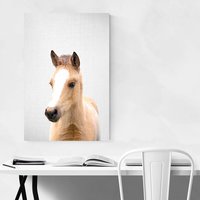Cute Baby Horse Peekaboo Animal Metal Art Print
