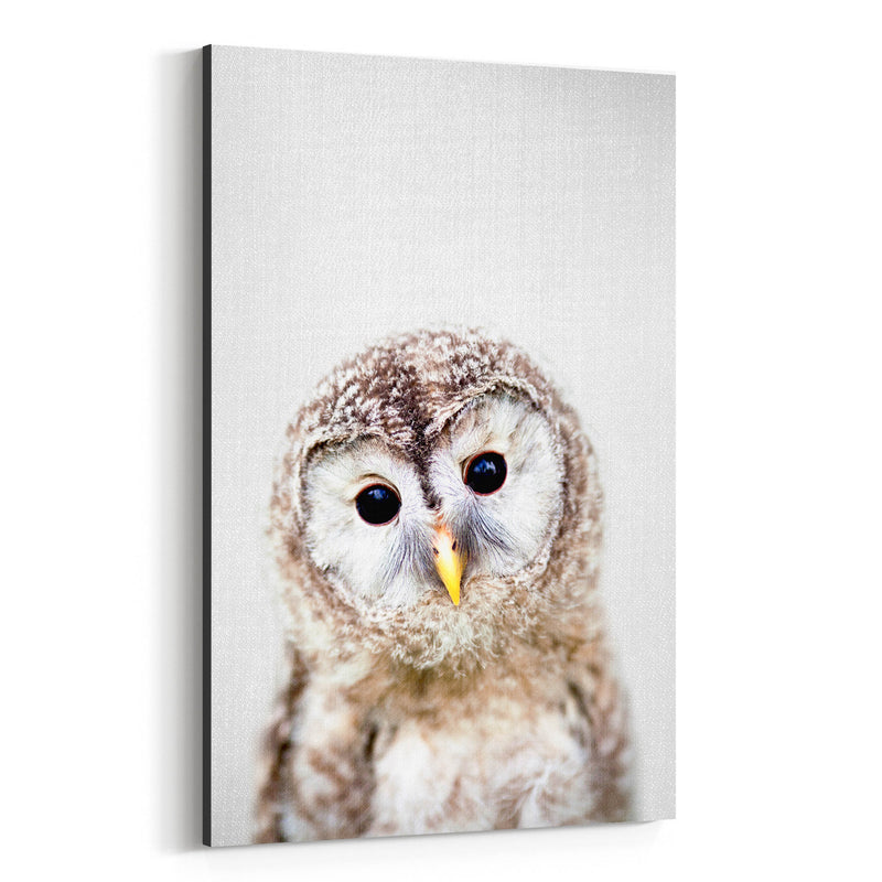 Baby Owl Peekaboo Nursery Animal Canvas Art Print