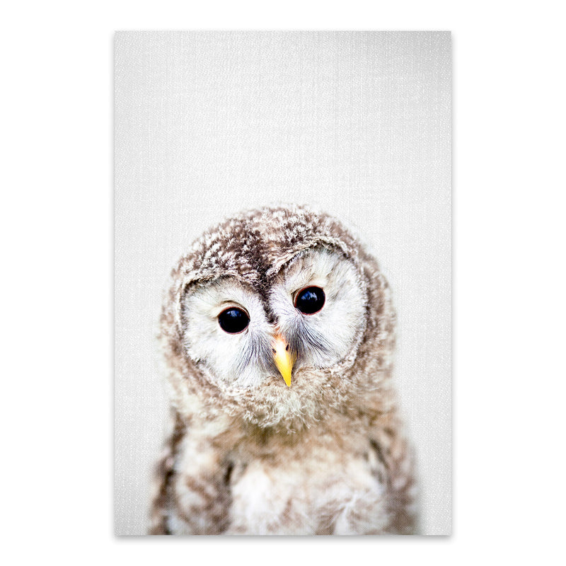 Baby Owl Peekaboo Nursery Animal Metal Art Print