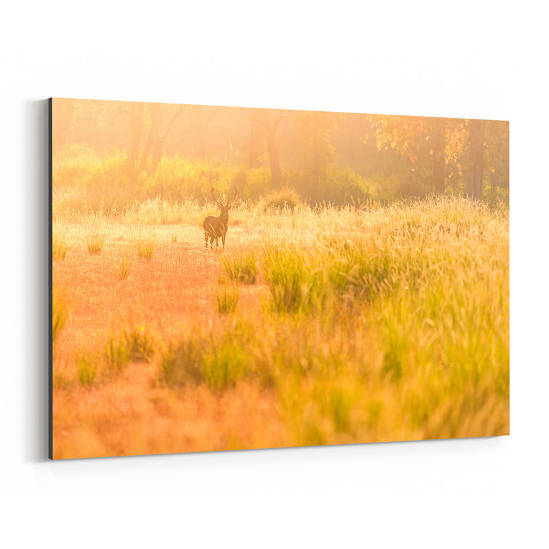 Kanha National Park India Deer Canvas Art Print