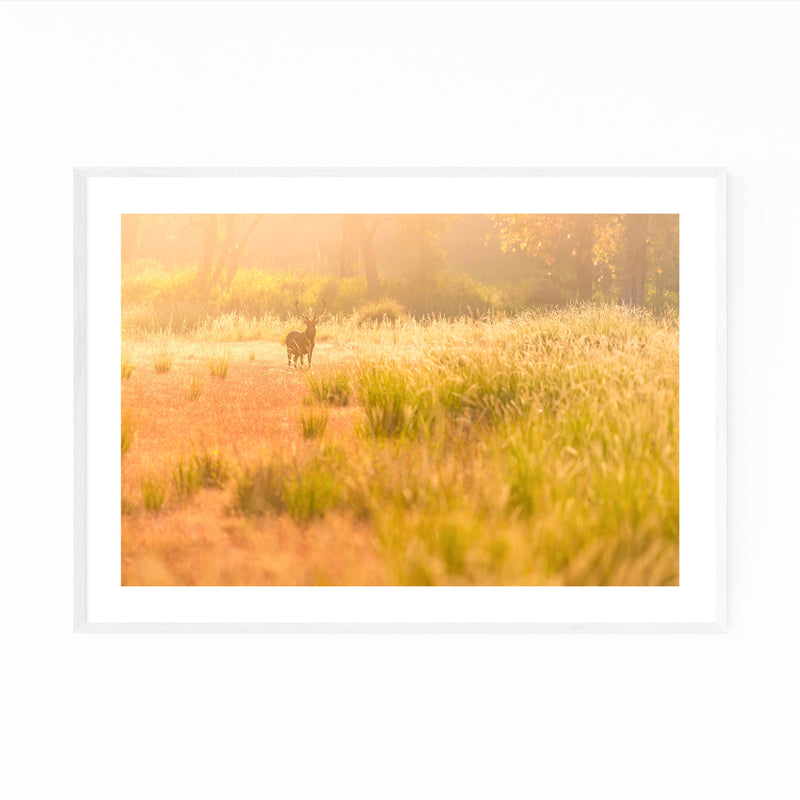 Kanha National Park India Deer Framed Art Print