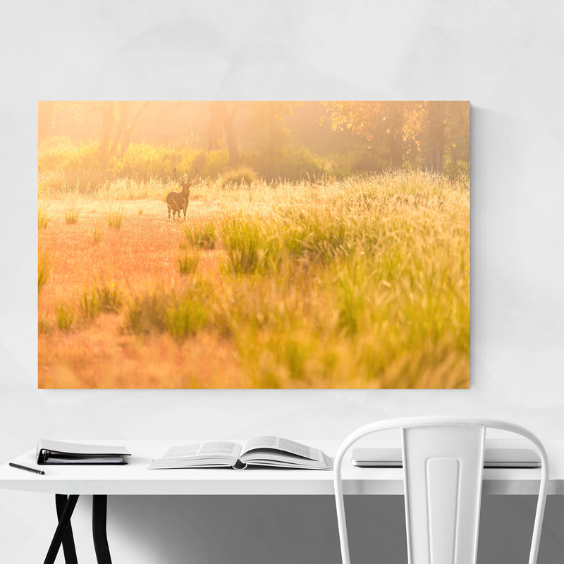 Kanha National Park India Deer Metal Art Print