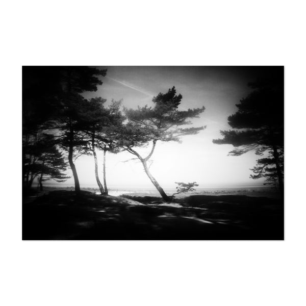 Black White Beach Tree Nature Art Print