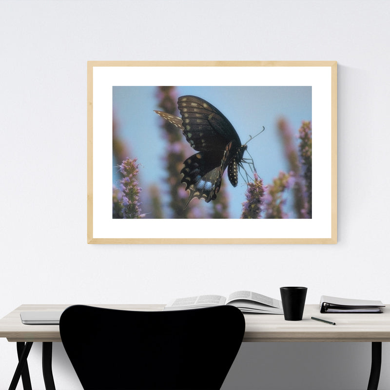 Swallowtail Butterfly Animal Framed Art Print