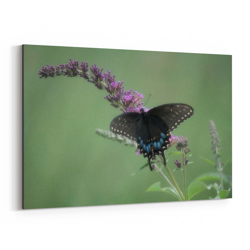 Swallowtail Butterfly Animal Canvas Art Print