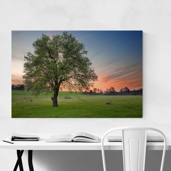 Bulgaria Tree Field Meadow Rural Art Print
