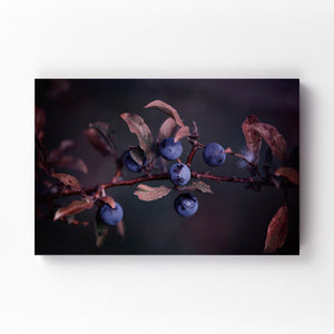 Blue Autumn Berries Photography Mounted Art Print