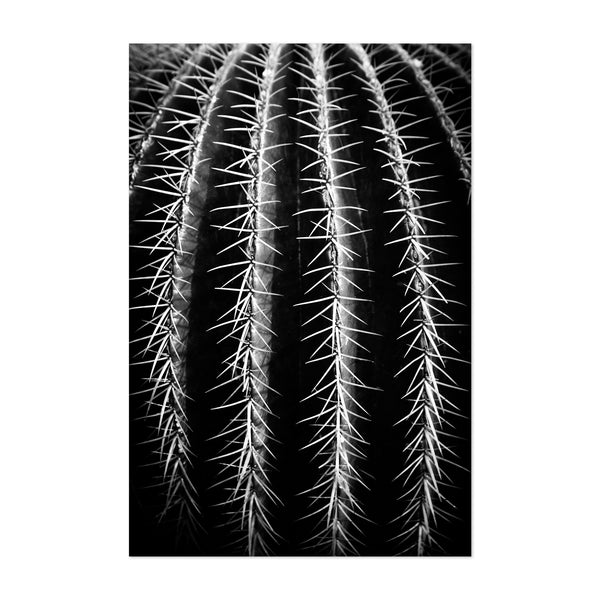 Cactus Close Up Nature Photo Art Print