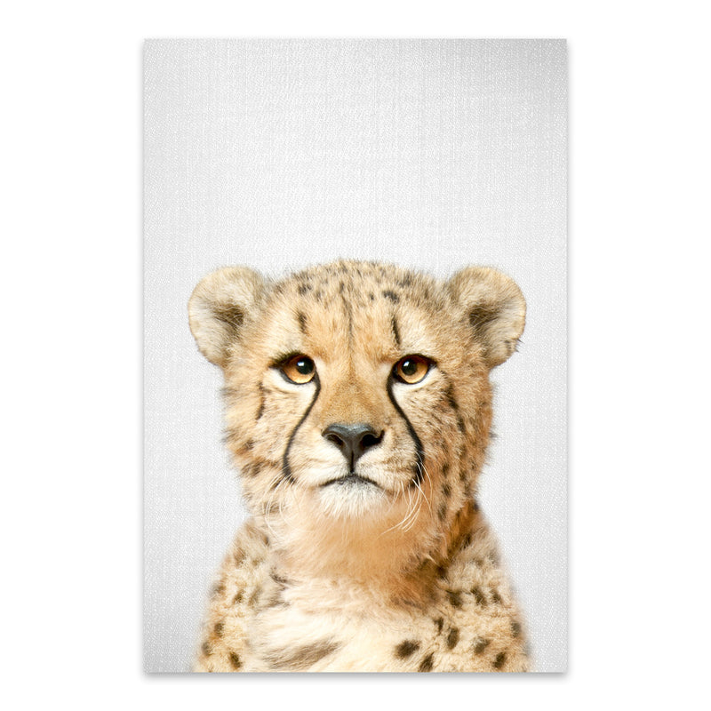 African Cheetah Peekaboo Animal Metal Art Print