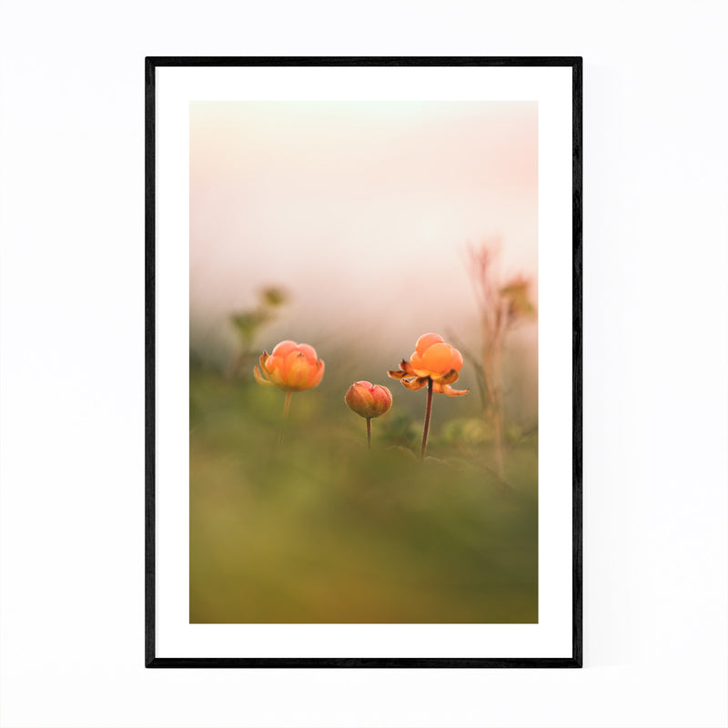 Tydal Norway Cloudberries Framed Art Print