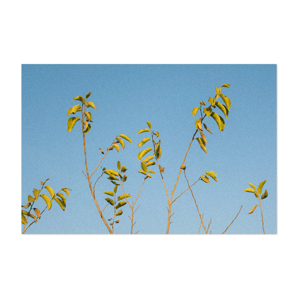 Blue Yellow Sky Plant Art Print