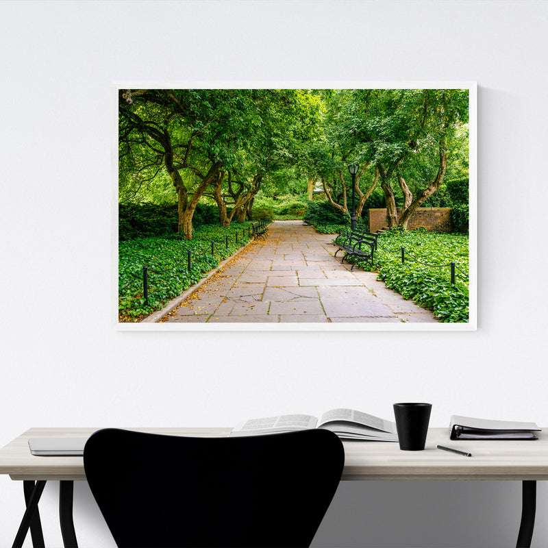 Central Park Trees New York City Framed Art Print