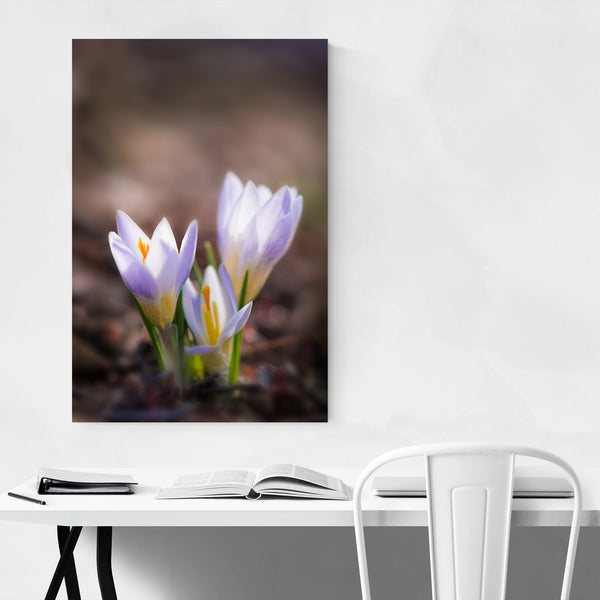 Crocus Flower Floral Botanical Art Print